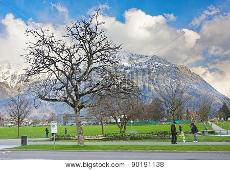 Tree And Mountains In Interlaken, Switzerland