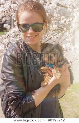 Yorkshire terrier puppy in the hands of girl