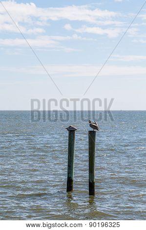 Two Brown Pelicans On Wood Posts In Ocean