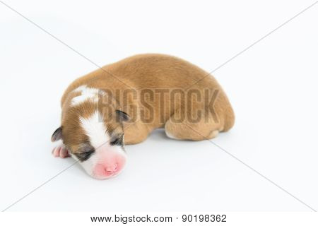 One Day For Newborn Pup