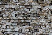 pic of algae  - Sawn slate making up dry stone wall - JPG