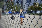 picture of chain link fence  - Group of padlocks locked to chain link fence taken with shallow depth of field - JPG