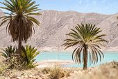 foto of oasis  - Palm trees around the oasis  in hassilabied morocco - JPG
