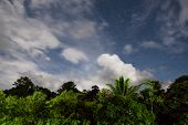 image of moonlight  - Rainforest treetops and starry sky with clouds in moonlight at borneo malaysia - JPG