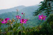 picture of hibiscus  - Hibiscus flowers garden Linh Ung Bai But Pagoda Danang - JPG