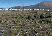 picture of canary-islands  - vineyards on black volcanic sand at La Geria Valley Lanzarote Island Canary Islands Spain - JPG
