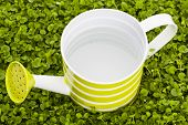 picture of weed  - Green watering can on kidney weed lawn - JPG