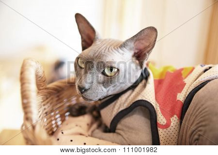 Sphynx Hairless Cat In Basket Background Pet Design
