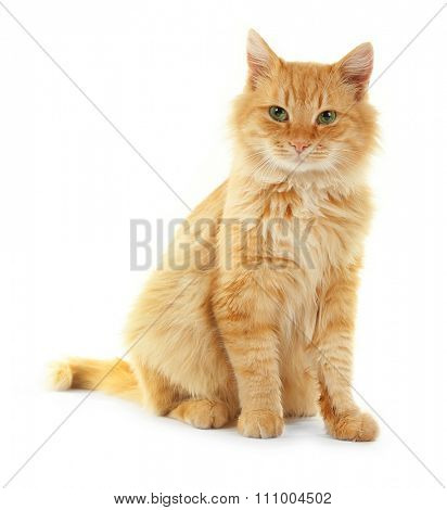 Adorable red cat isolated on white background