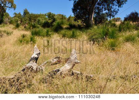 Australian Bushland with Fallen Tree