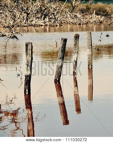 Wooden Posts: Reflections