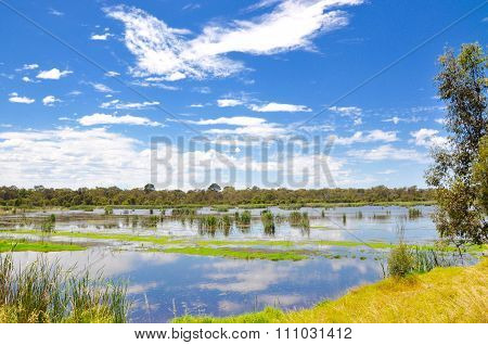 Beelier Wetlands: Cloud Reflections