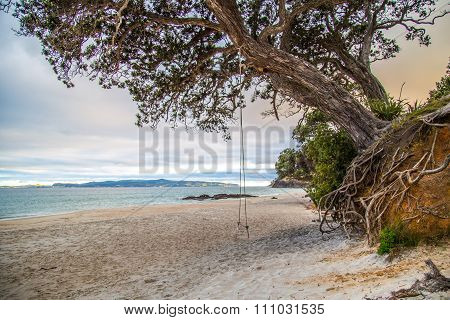Beach Blue Sky Landscape North Island New Zealand cormandel Wharekaho