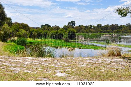 Beelier Wetlands: Nature's Green Landscape