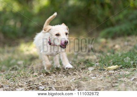 Puppy Running