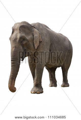 Benevolent Elephant