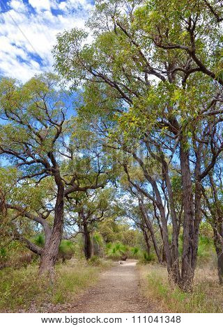 Bibra Lake Reserve: Bushland Path