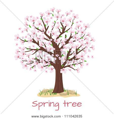 Spring blossom cherry tree vector