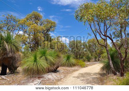 Bibra Lake Reserve Path