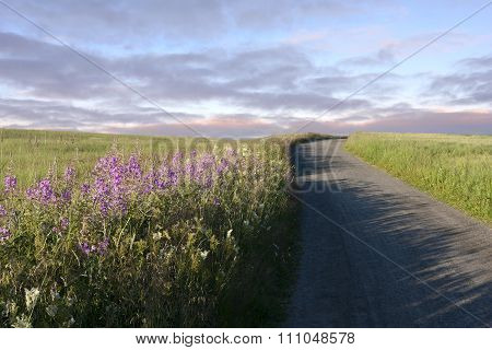 Gravel road, dirt road and meadows in evening sun.