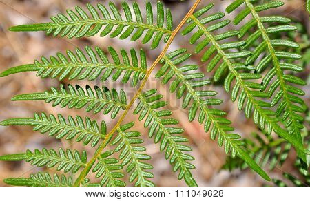 Nature's Leaf Design