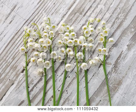Lilies Of Valley Springs