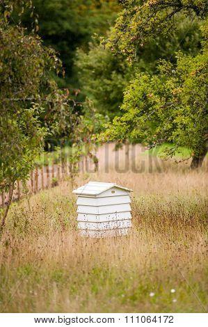Bee hive in garden