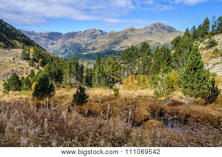 Colorful Forest In The Valley Of Estanyo River, Andorra
