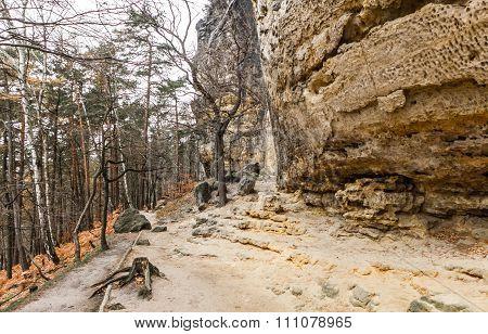 Stone In Forest - Bohemian Switzerland