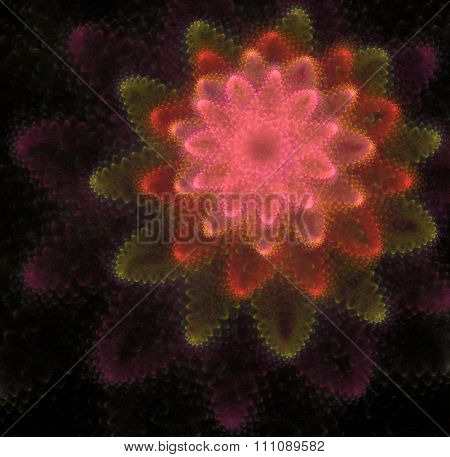 Abstract Black Background With Rose And Orange Color Flower Or Explosion Texture, Off Center
