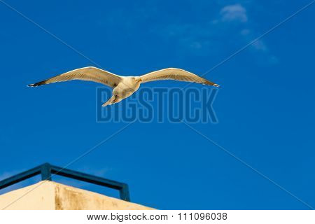 Seagull Above The Roofs Of Houses.