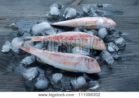 fresh Mullet Lying On A Bed Of Ice