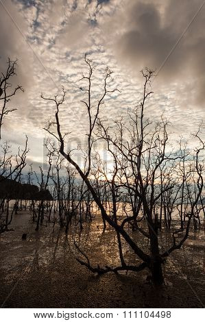 Dead trees and muddy beach at sunset