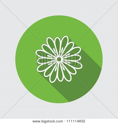Spring flower. Camomile, dog-daisy icons. Floral symbol. Round circle flat icon with long shadow. Ve