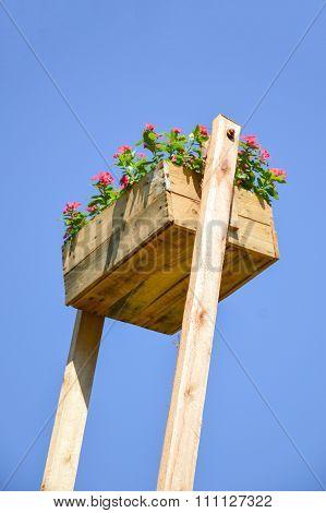 zinnia flower on wooden pot