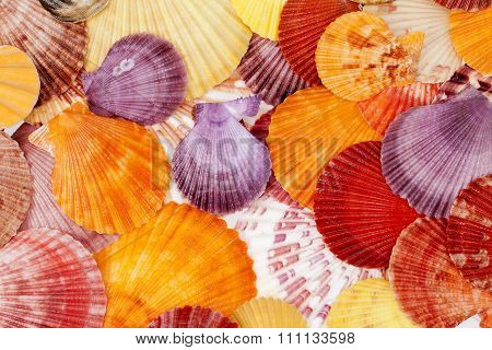 Background With Colorful Sea Shells Of Mollusks, Close Up