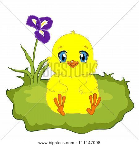 Cute yellow chicken