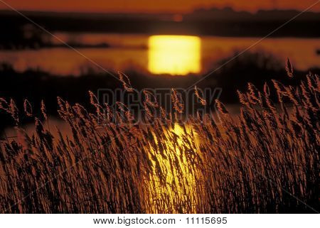 Sunrise in the salt marsh
