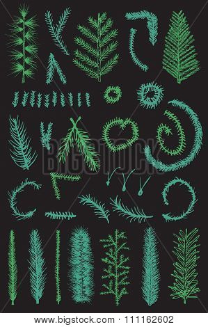 Hand drawn set green fir fine branch vector isolated