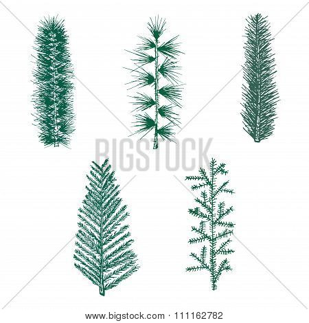 Hand drawn set green fir branch pine vector isolated