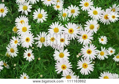 Field Of Flowers Background