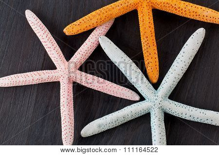 Starfish  On Rustic Wooden Boards