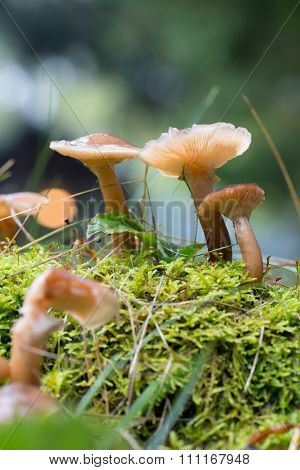 mushrooms growing on spring with blurred background