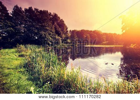 Sunset Over Lake With Ducks In The Forest