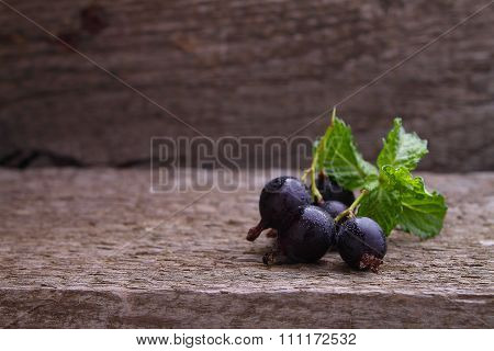 Berry, Black Currant And Gooseberry Hybrid