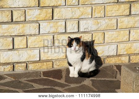 cat at the wall