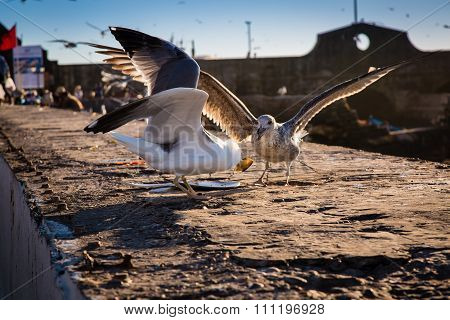 Gulls In The Harbor
