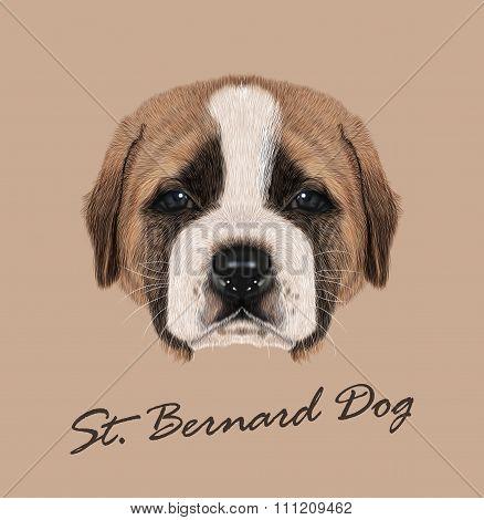 Vector Illustated Portrait Of St. Bernard Dog