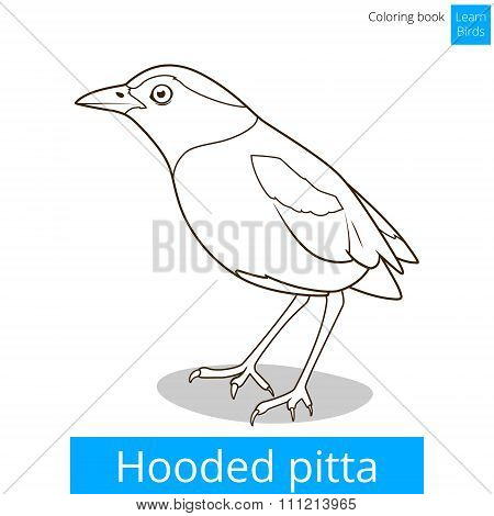 Hooded pitta bird learn birds coloring book vector