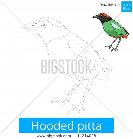 Hooded pitta bird learn to draw vector